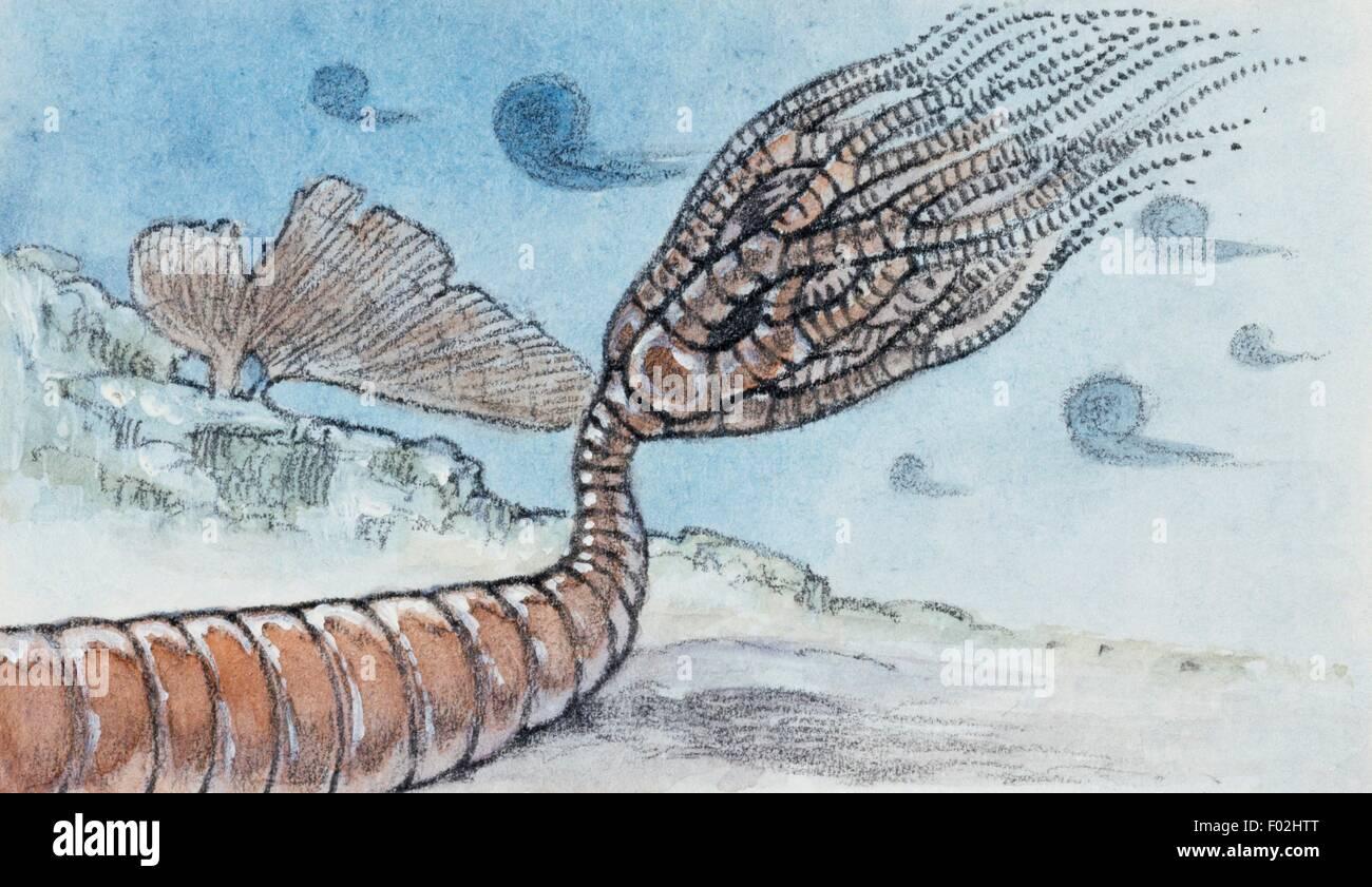 Rekonstruktion von Crinoid, Stachelhäuter, auch als Fossil gefunden. Zeichnung. Stockbild