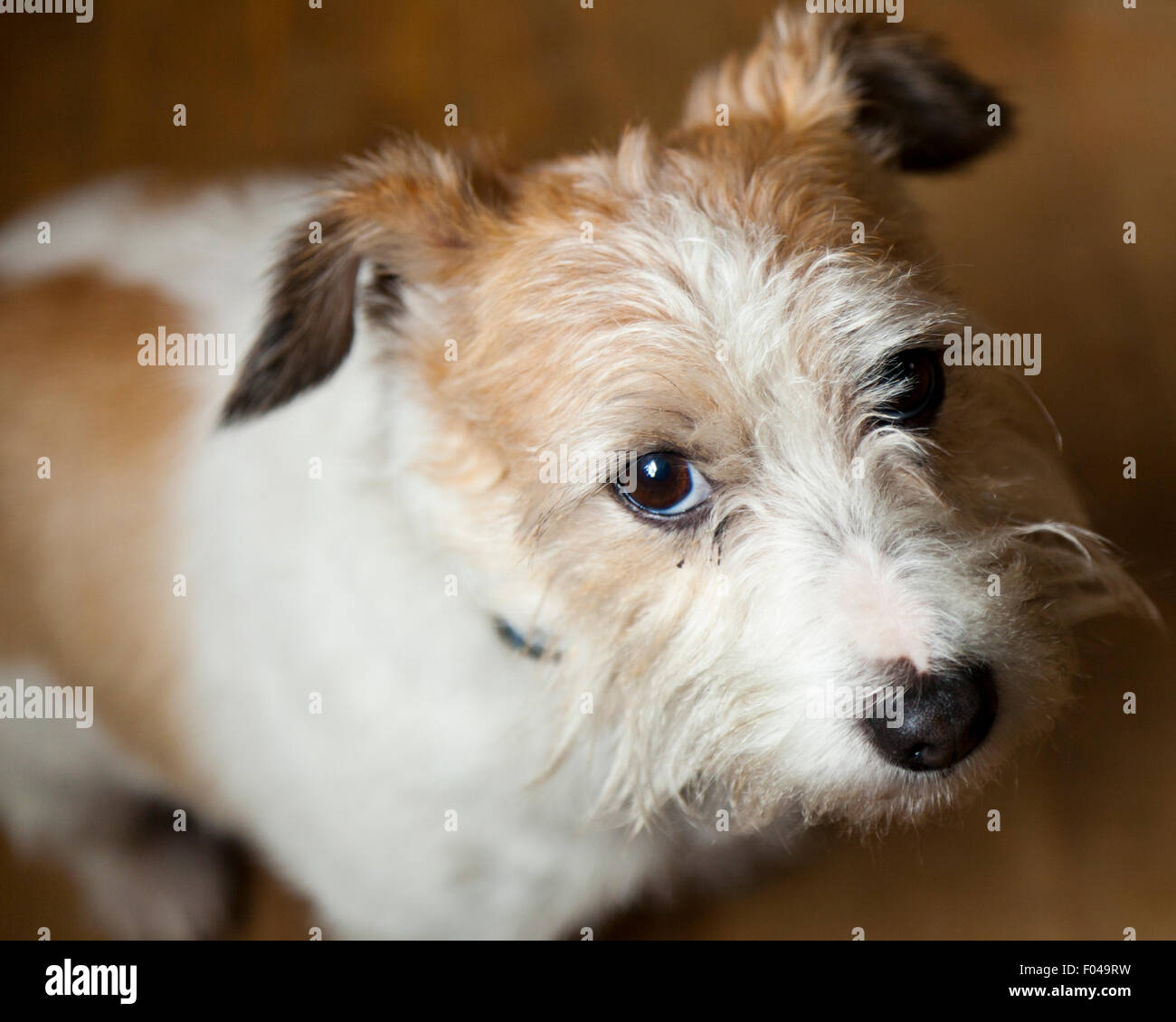 Long Haired Terrier Stockfotos Long Haired Terrier Bilder Alamy