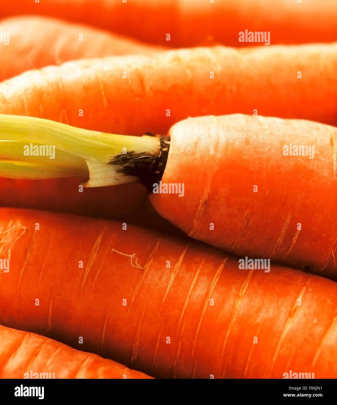 Die Nahaufnahme von frischen roten Karotten Stockfoto