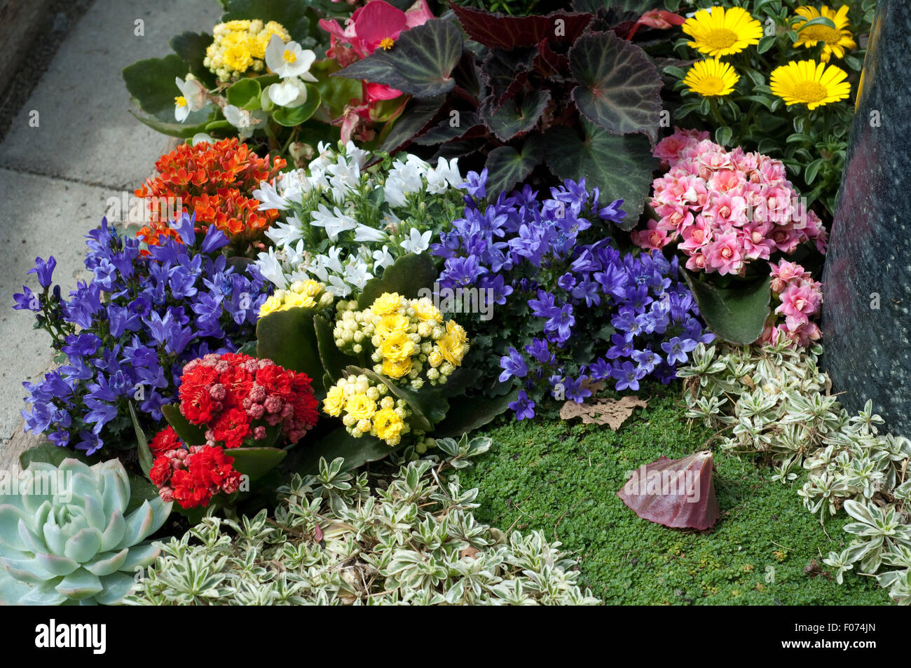 grabbepflanzung randbepflanzung blumen stockfoto bild 86209165 alamy. Black Bedroom Furniture Sets. Home Design Ideas