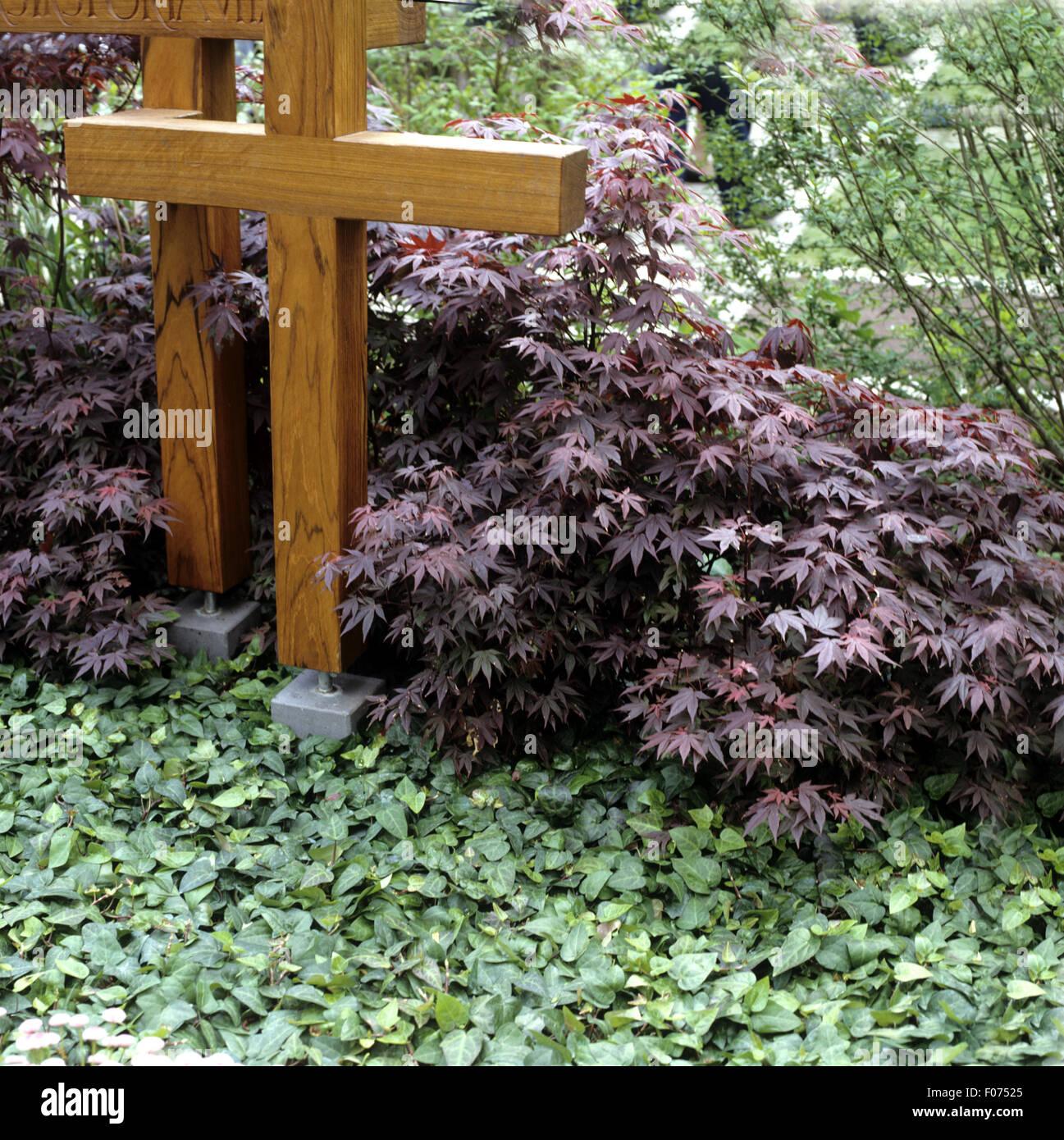grabbepflanzung faecherahorn stockfoto bild 86209485 alamy. Black Bedroom Furniture Sets. Home Design Ideas