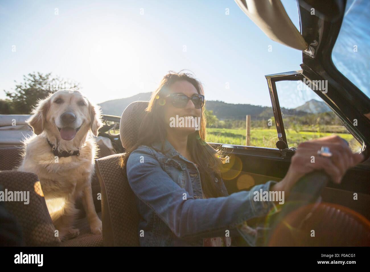 Reife Frau und Hund, im Cabrio Stockbild