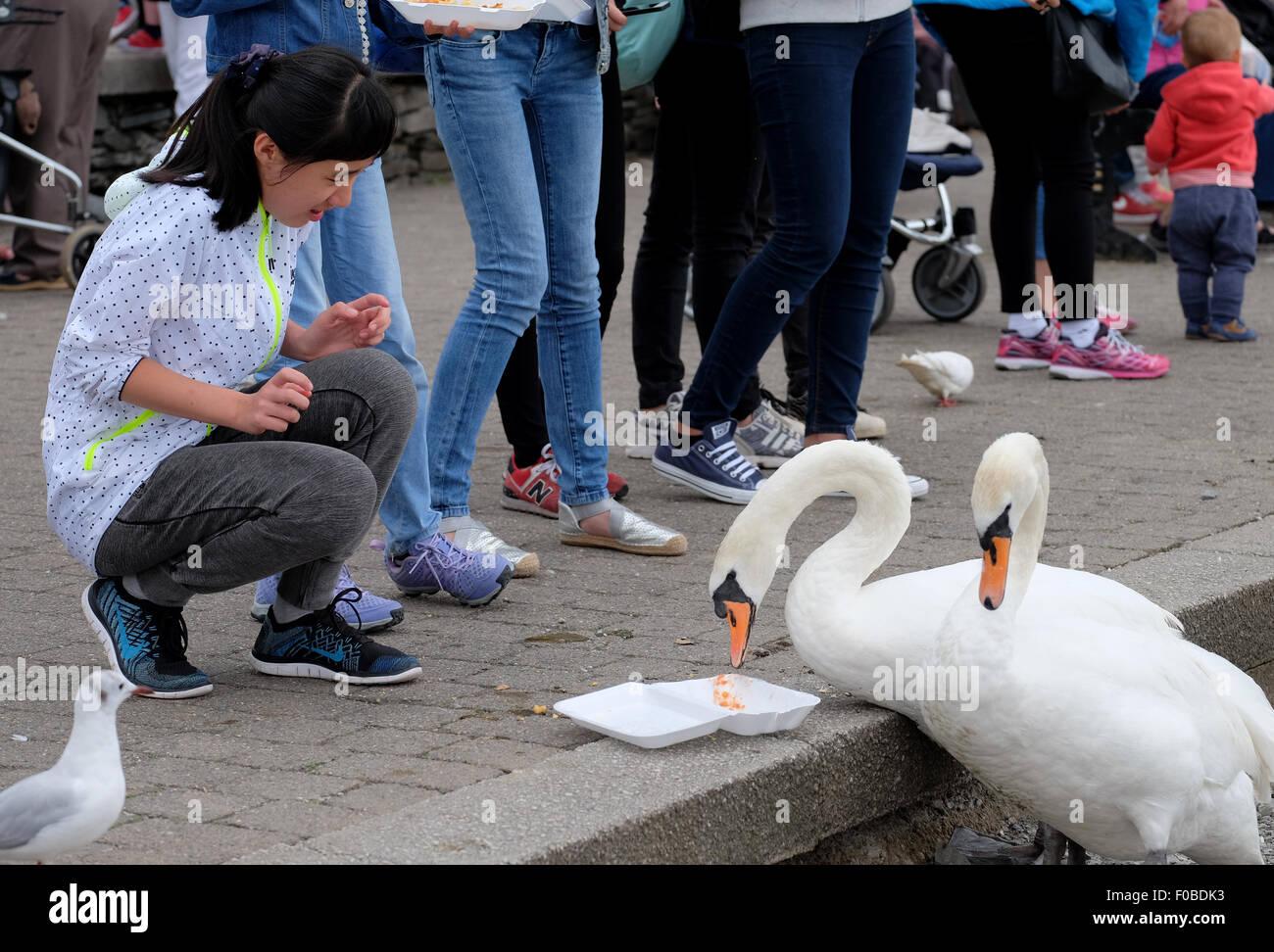 Touristen in Bowness-On-Windermere Fütterung der Schwäne und Vögel Chips am Ende verlieren die meisten Stockbild