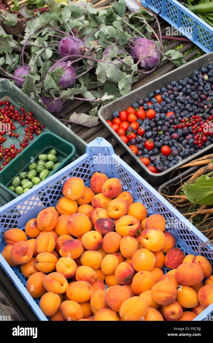 Kisten mit geernteten Aprikosen, Tomaten, Blaubeeren und anderes Gemüse Stockbild