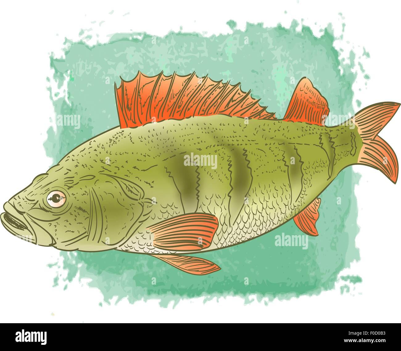 Süßwasserfische Farbzeichnung auf Aquarell Hintergrund Vektor ...