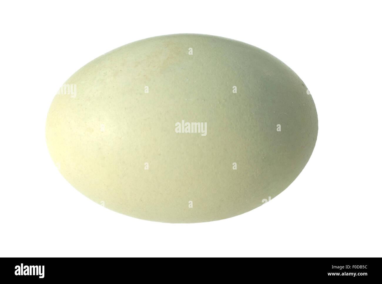 Gruenes; Ei; Huehnerei; Eier; Stockbild