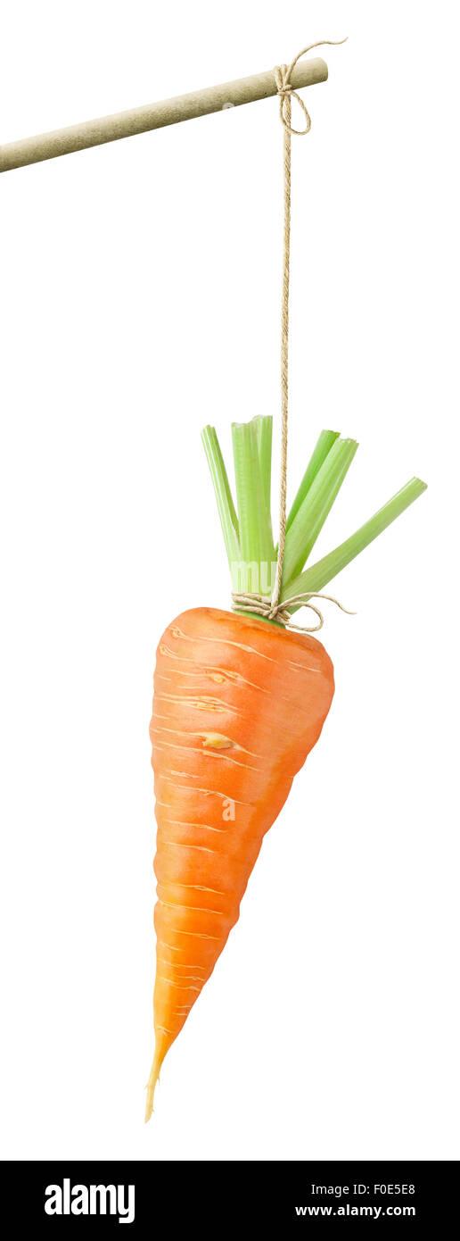 Karotte baumelt an einer Schnur, isoliert auf weiss Stockbild