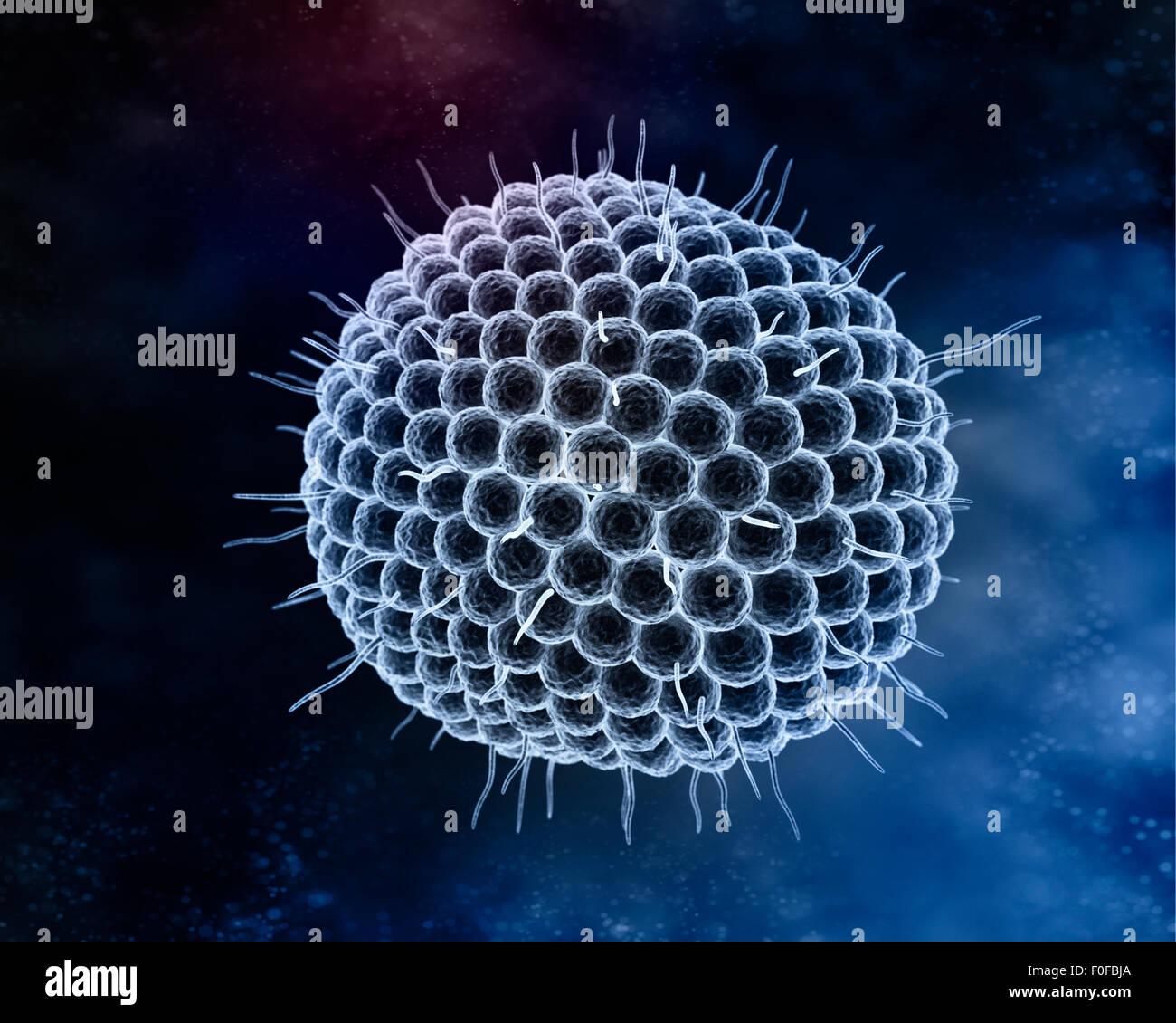 Varizella-Zoster-Virus oder Varicella - Zoster-Virus (VZV) ist eine der acht Herpesviren infizieren Menschen und Stockbild