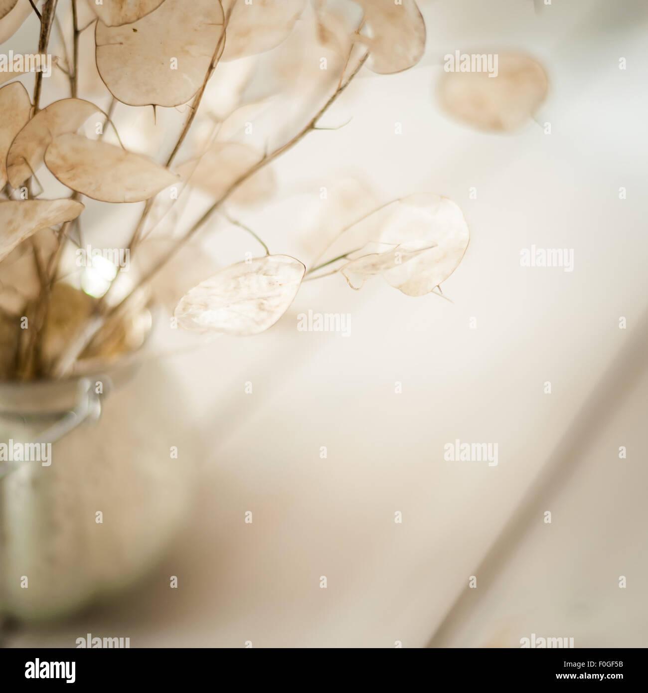 Nahaufnahme von Ehrlichkeit Samenkapseln in einer Runde Vase auf hellem Hintergrund Stockbild