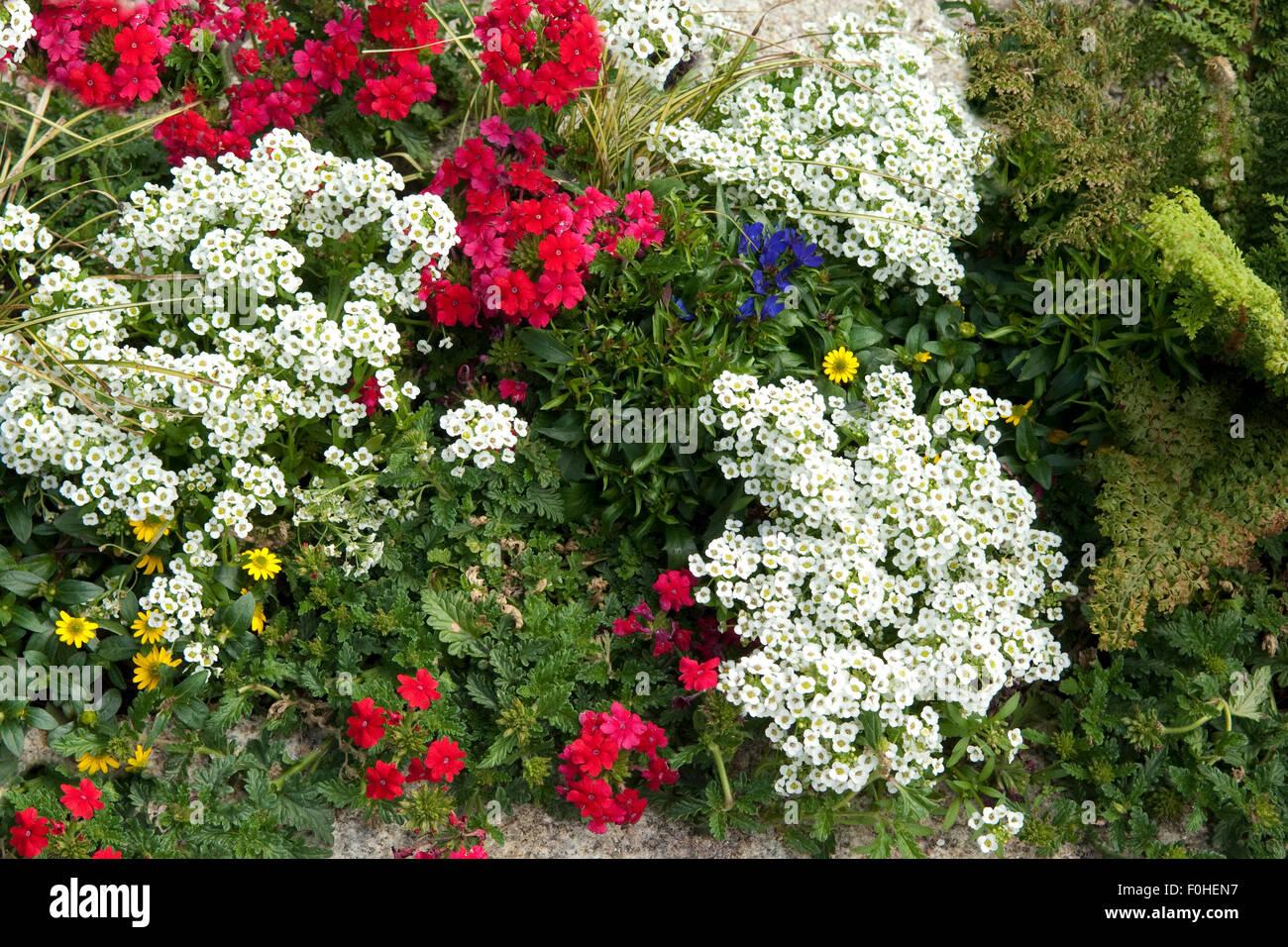 grabbepflanzung sommerblumen stockfoto bild 86436595 alamy. Black Bedroom Furniture Sets. Home Design Ideas