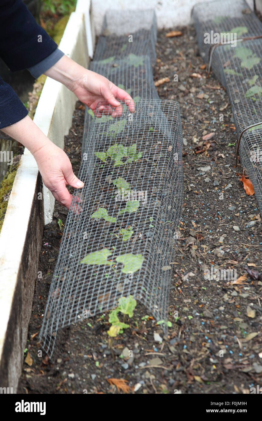 Plant Protection Pests Stockfotos & Plant Protection Pests Bilder ...
