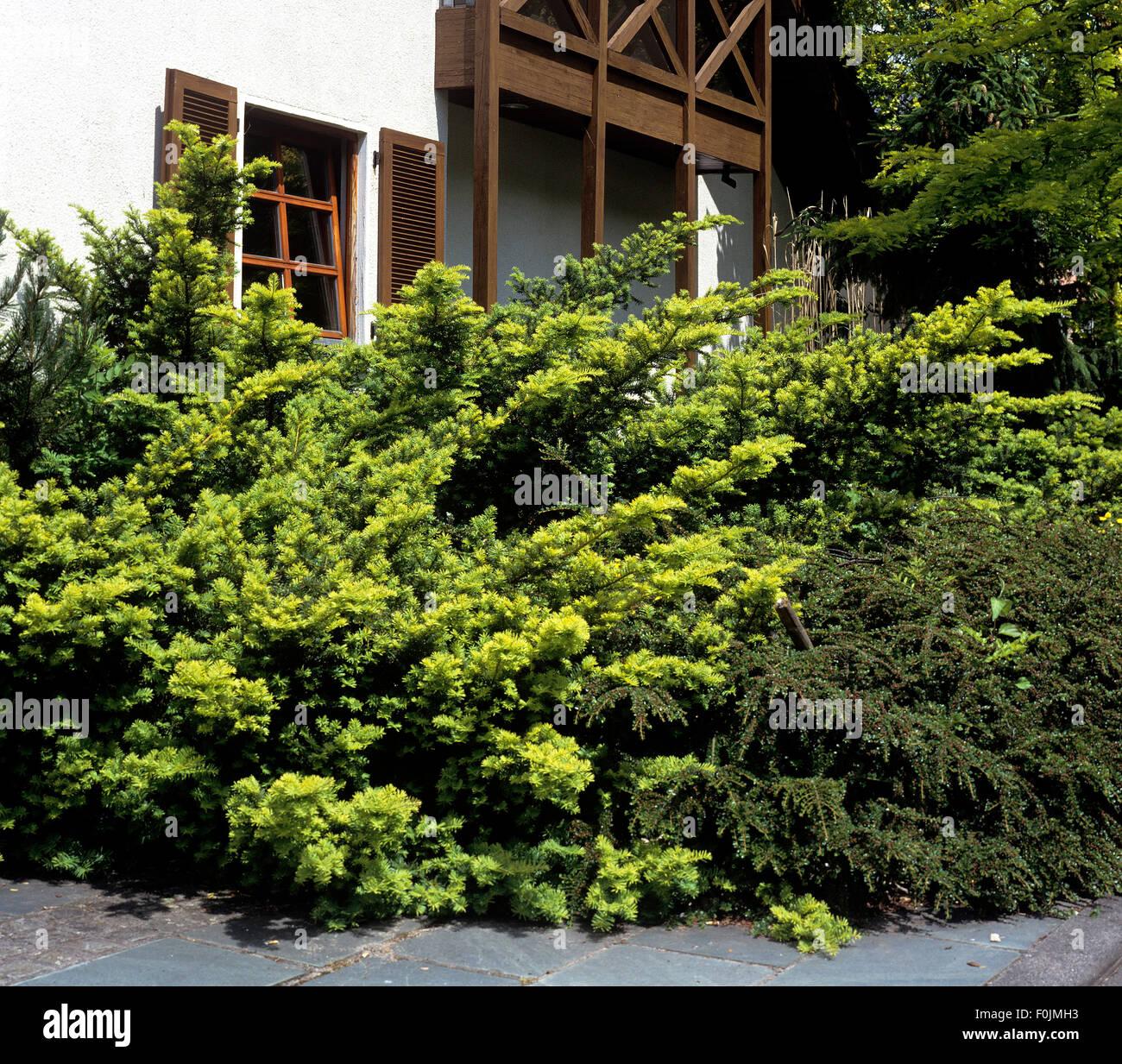 Vorgarten Stockfotos & Vorgarten Bilder