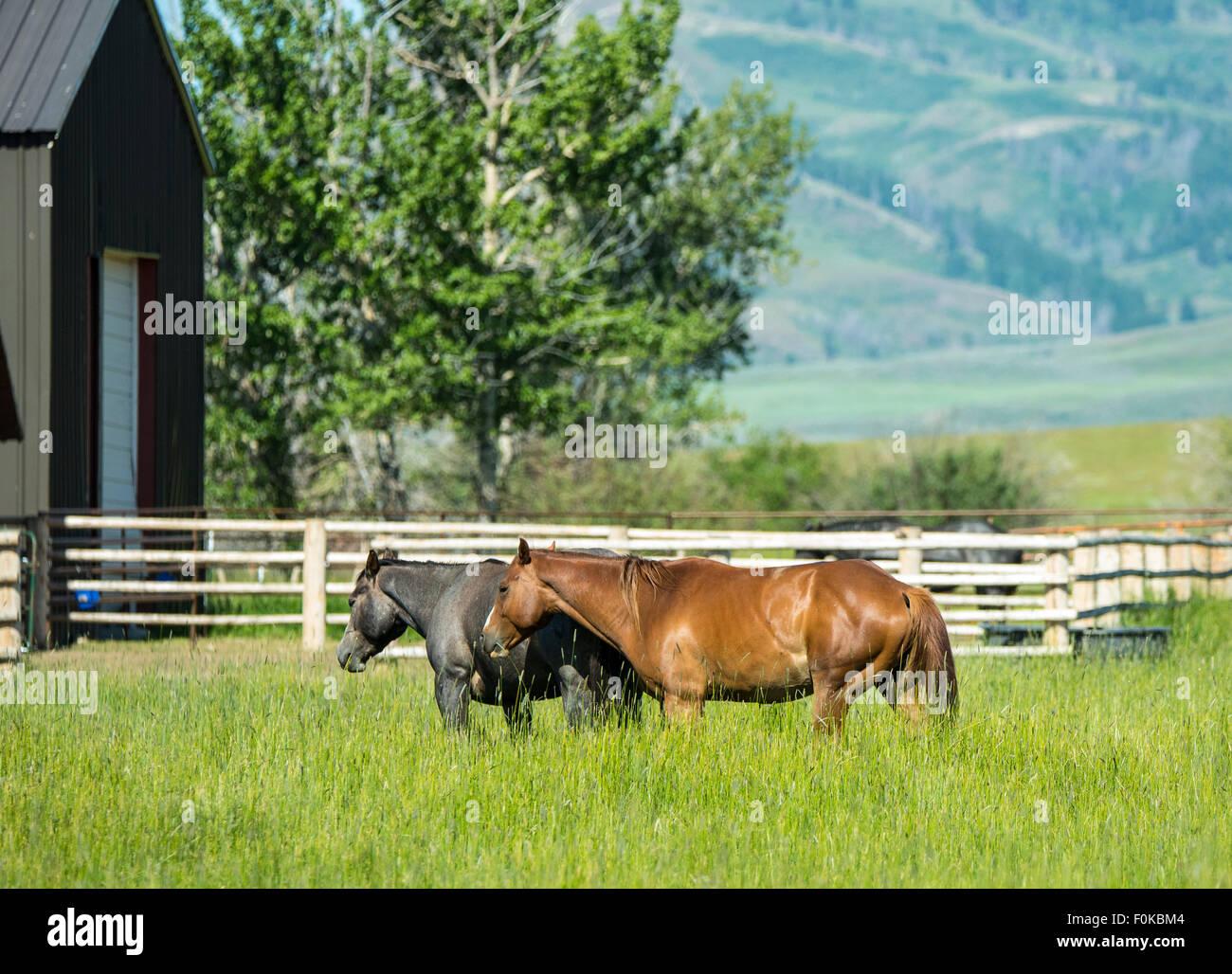 Hot Spring Ranch Red Barn Und Pferde Weiden In Der Nähe Von