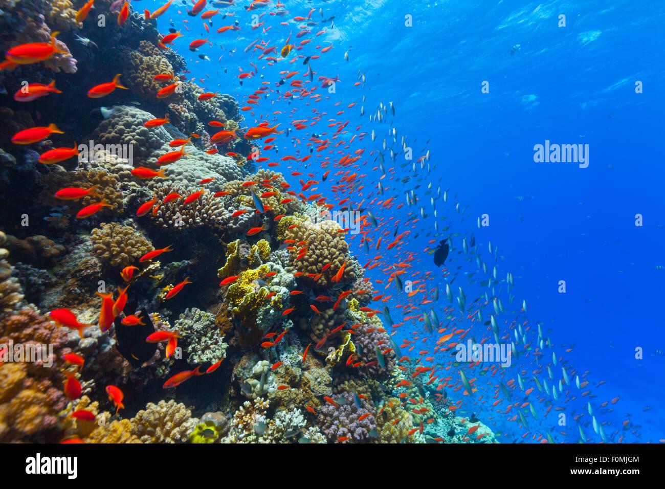 Unterwasser Korallenriff Stockbild