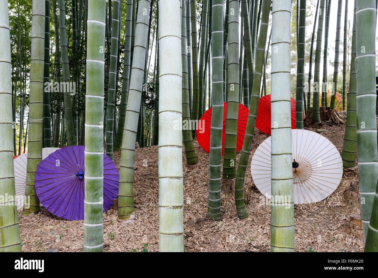 Japanische Schirme liegen unter Bambus Bäume, Kodai-Ji, südlichen Higashiyama, Kyoto, Japan, Asien Stockbild