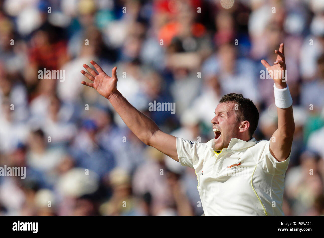 London, UK. 21. August 2015. Investec Asche 5. Test, Tag 2. England gegen Australien. Australiens Peter Siddle Appelle Stockbild