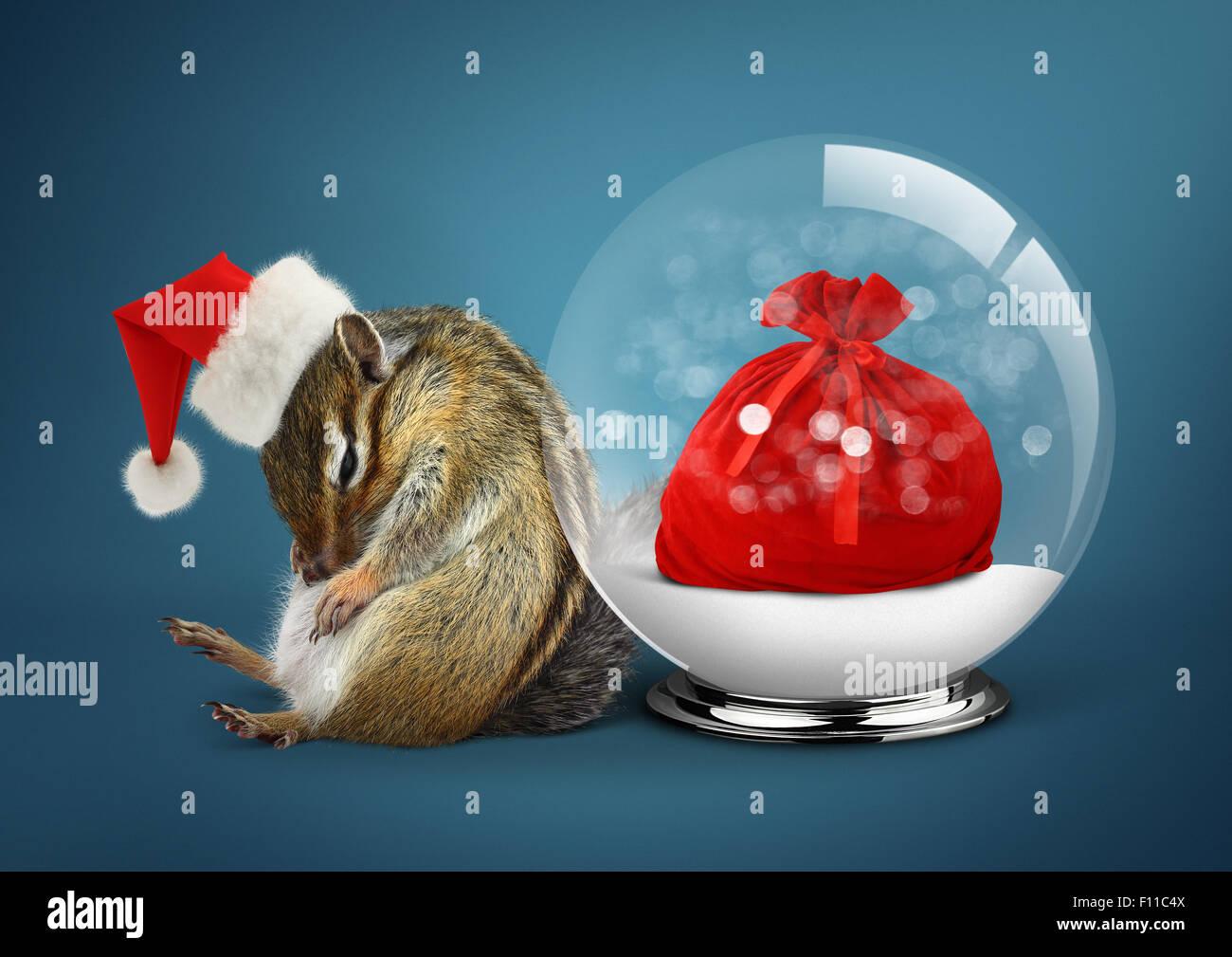 Lustige Tier Streifenhörnchen Als Weihnachtsmann Verkleidet Mit