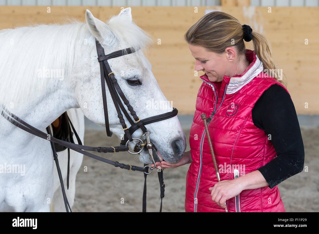 Deutsch Reiten Pony Reiter nach dem Reiten Lektion geben weiße Pony behandeln Stockbild