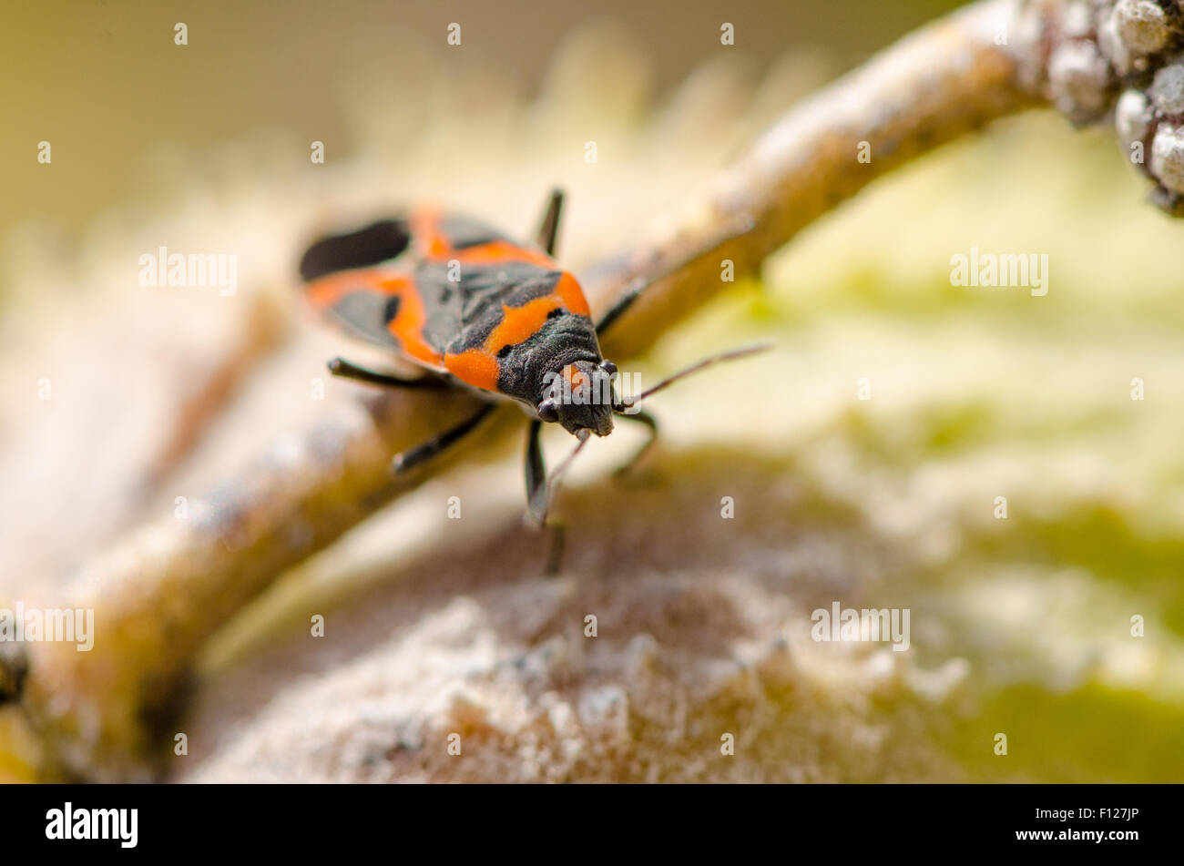 Insekt auf die Vegetation. Stockbild