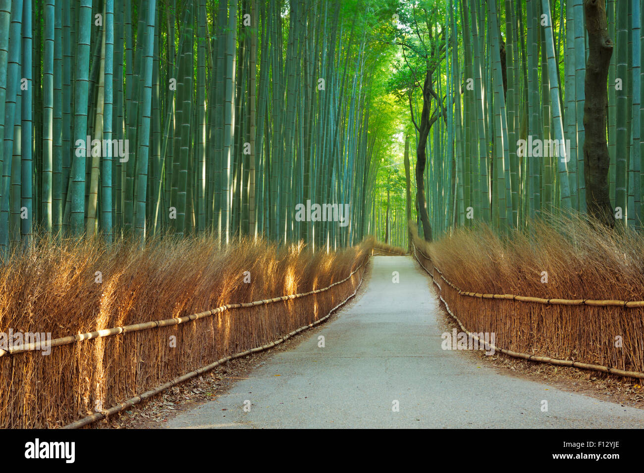 Ein Weg durch einen Bambuswald. Fotografiert an der Arashiyama Bambushain in der Nähe von Kyoto, Japan. Stockbild