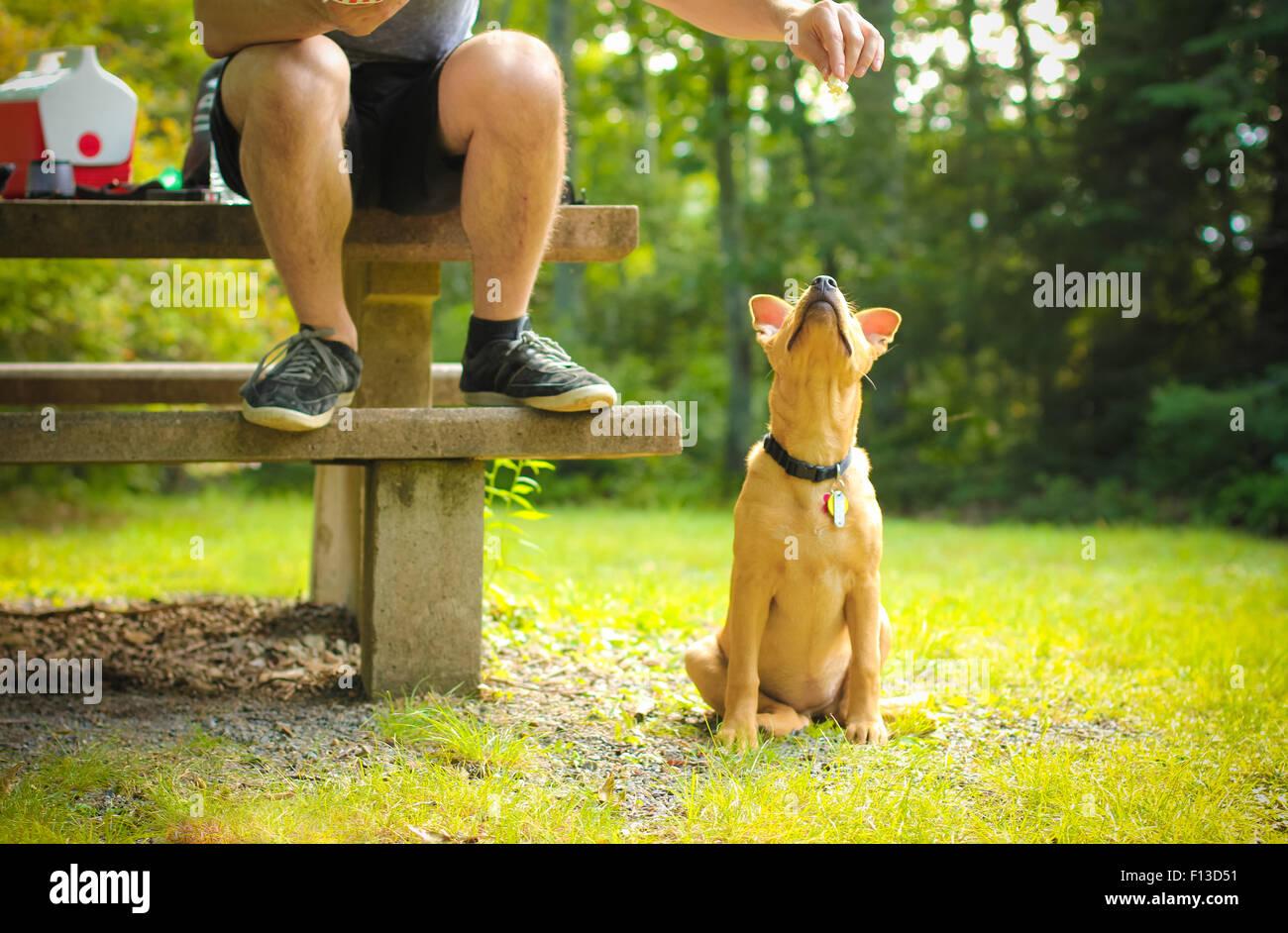 Mann sein Hund füttern Stockbild