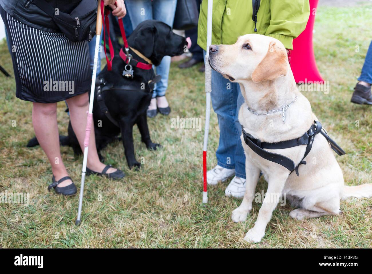 Blinde und Blindenhunde am letzten Training für die Tiere. Die Hunde durchlaufen verschiedene Schulungen vor Stockbild