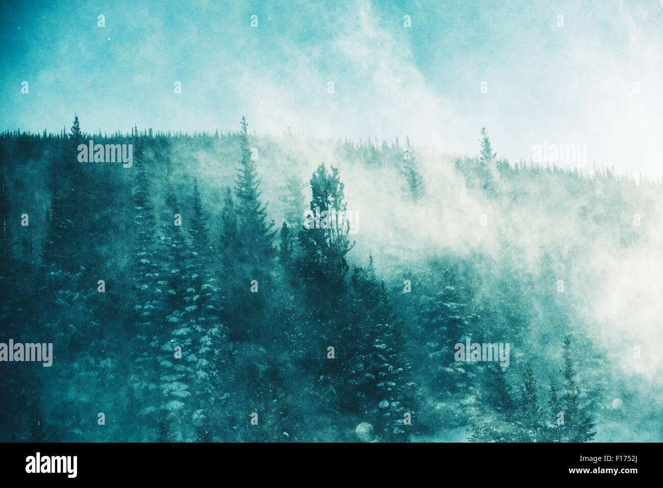 Der Wintersturm. Extreme Wintersturm Bedingungen mit starkem Wind und Schneetreiben im Wald. Winterlandschaft Stockbild