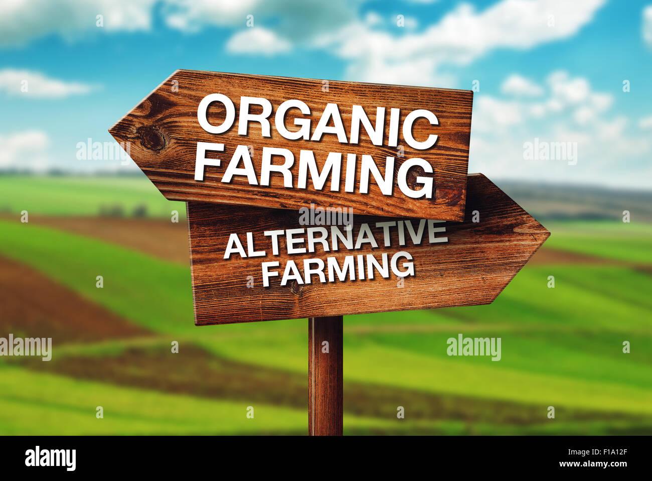 Bio oder Alternative Landwirtschaft, Konzept der Wahl in der landwirtschaftlichen Produktion, Ackerbau Kulturland Stockbild