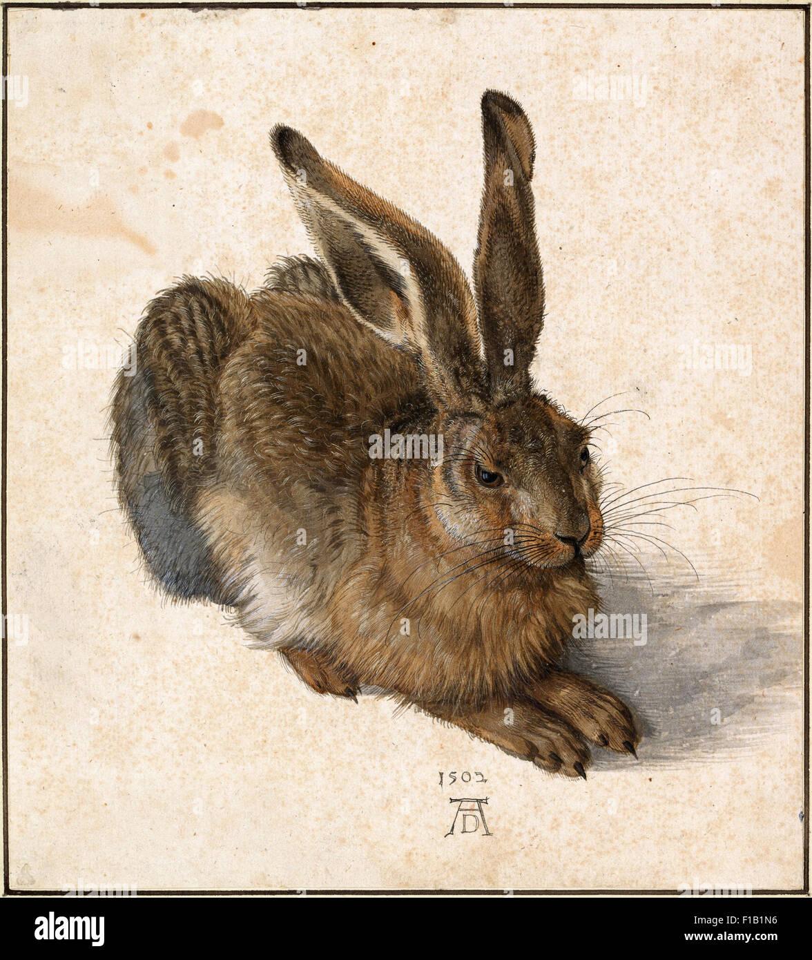 Albrecht Dürer - Hase Stockbild