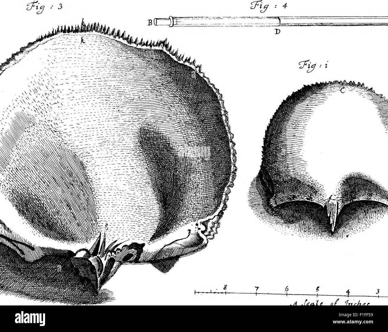 Berühmt Stirn Knochen Bilder - Physiologie Von Menschlichen ...