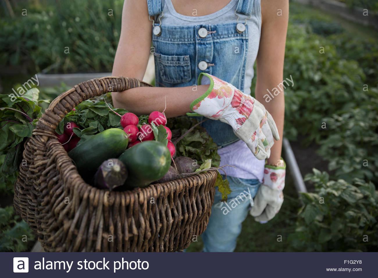 Frau mit frisch geerntetem Gemüse Korb hautnah Stockbild