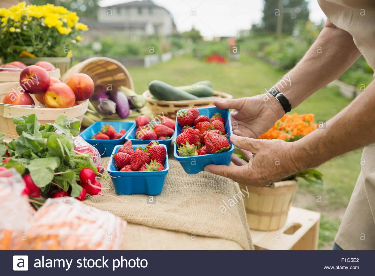 Landwirt Überprüfung frische Erdbeeren an Landwirte Marktstand Stockbild