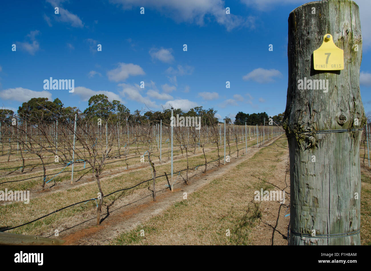 Australian Wines Stockfotos & Australian Wines Bilder - Alamy