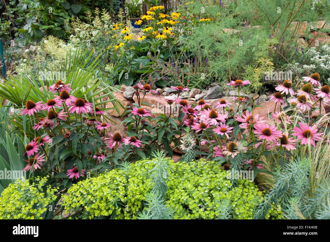 seit; trockenmauer; fuenf monate nach bepflanzung stockfoto, bild