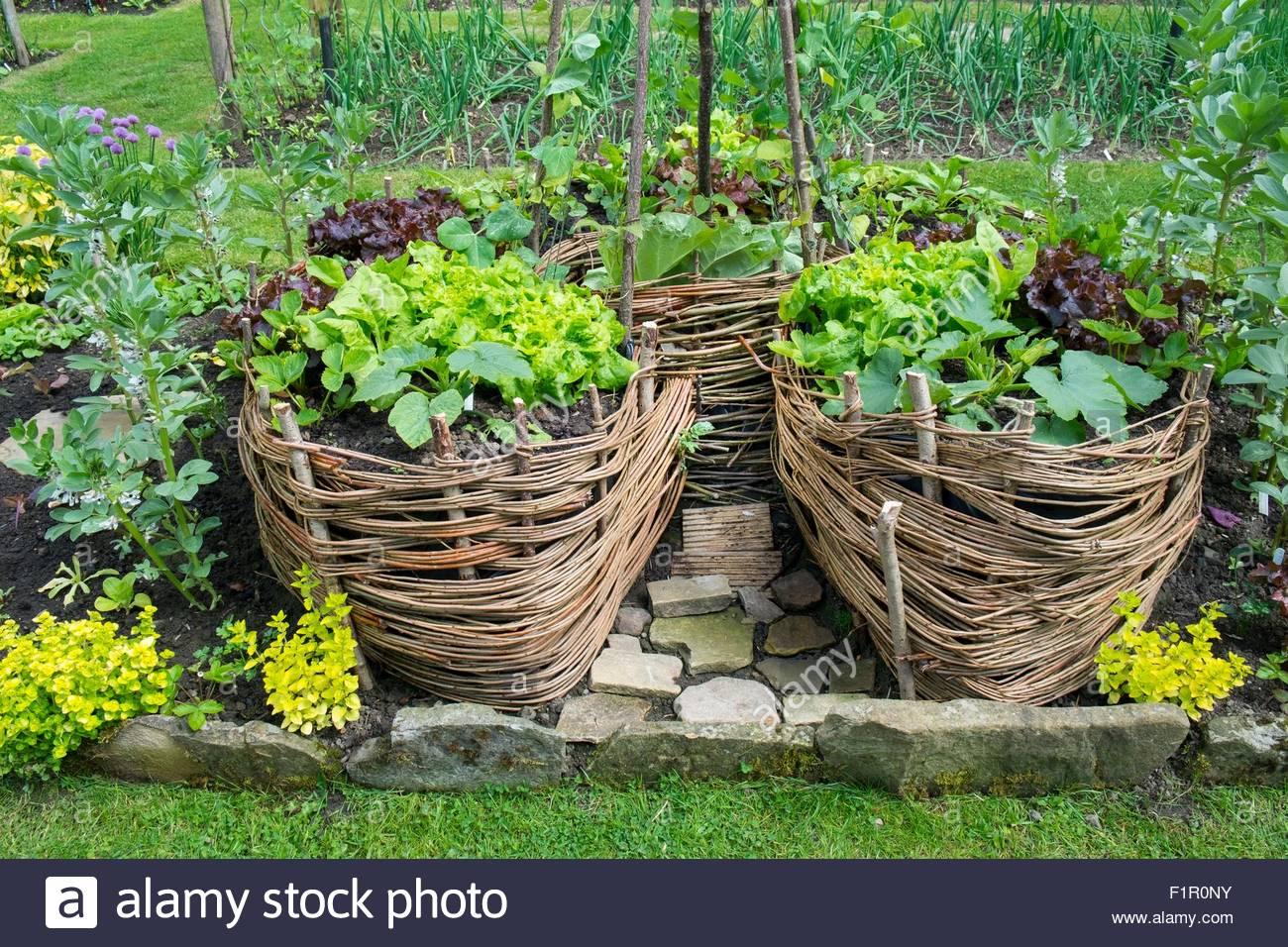 schl sselloch garten gebaut aus peddigrohr mit salat pflanzen wie rote beete zucchini und. Black Bedroom Furniture Sets. Home Design Ideas