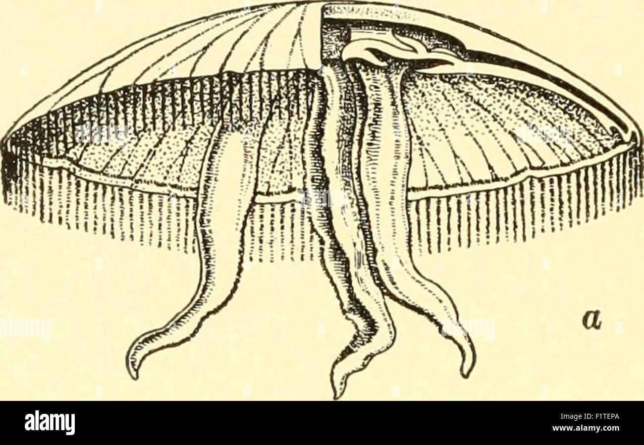 Elementarer Biologie; eine Einführung in die Wissenschaft des Lebens Stockfoto