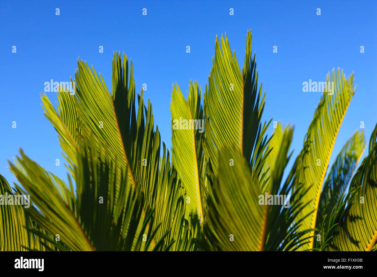 Palmblätter hautnah Stockbild
