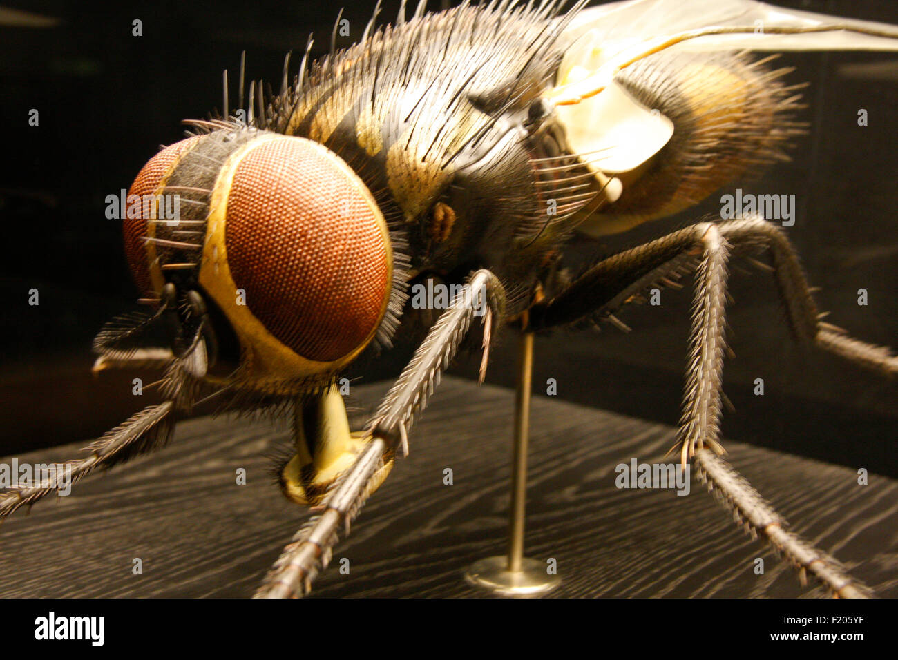 Insect Museum Stockfotos & Insect Museum Bilder - Alamy