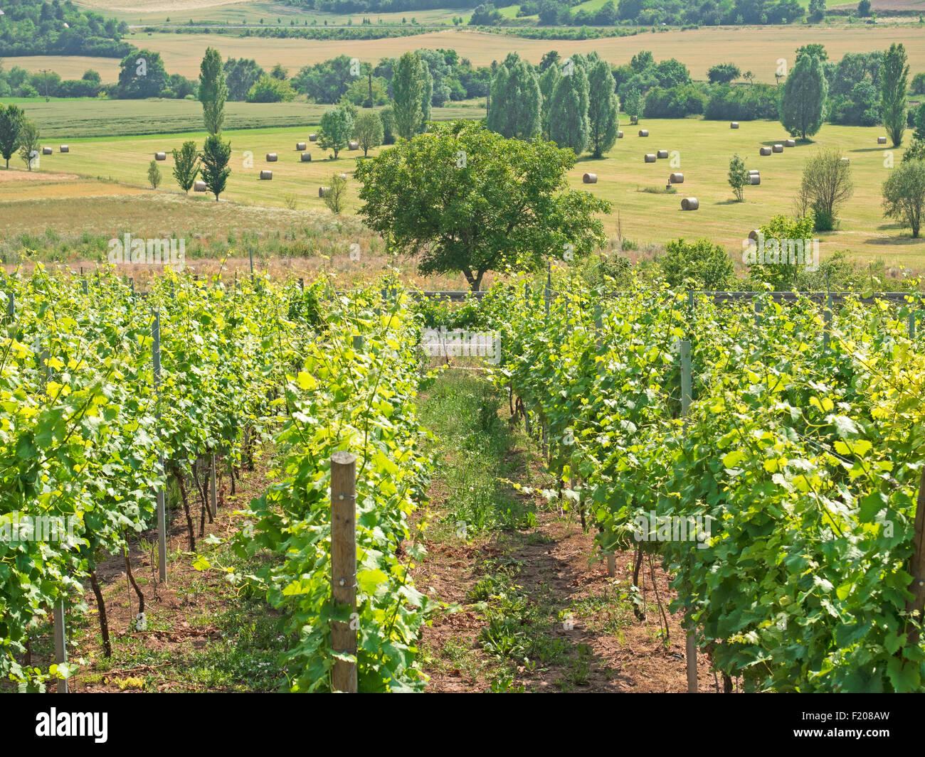Weingut Stockbild