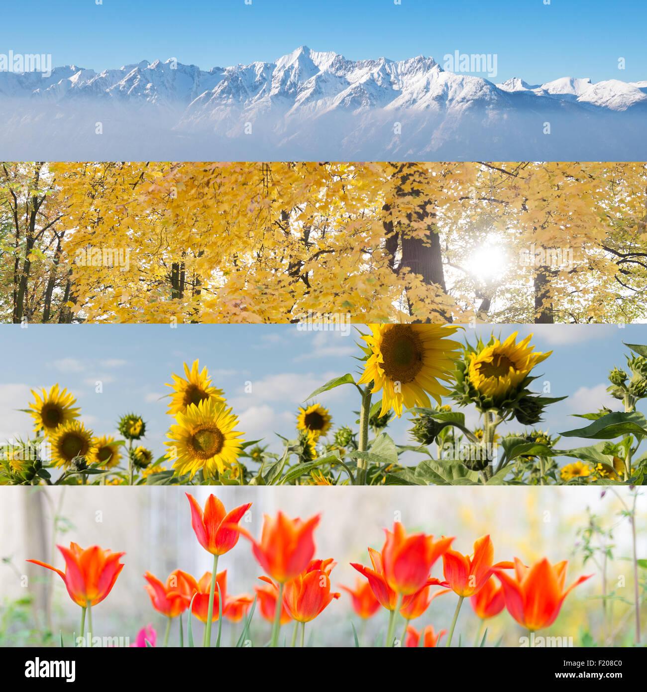 Vier Jahreszeiten in Einem Bild Stockbild