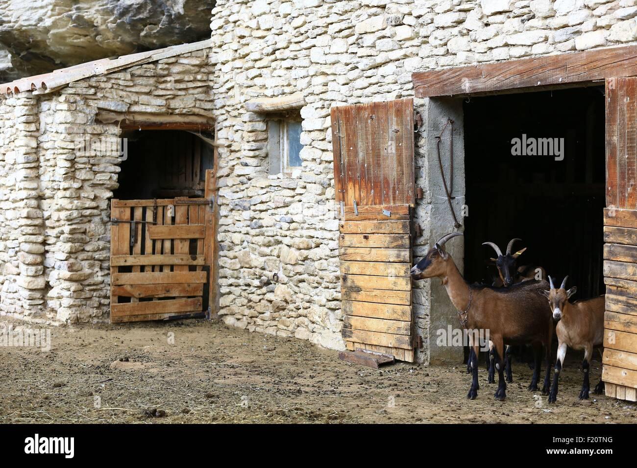 Frankreich, Vaucluse, Le Beaucet, Ziege Käse Produzent Stockbild
