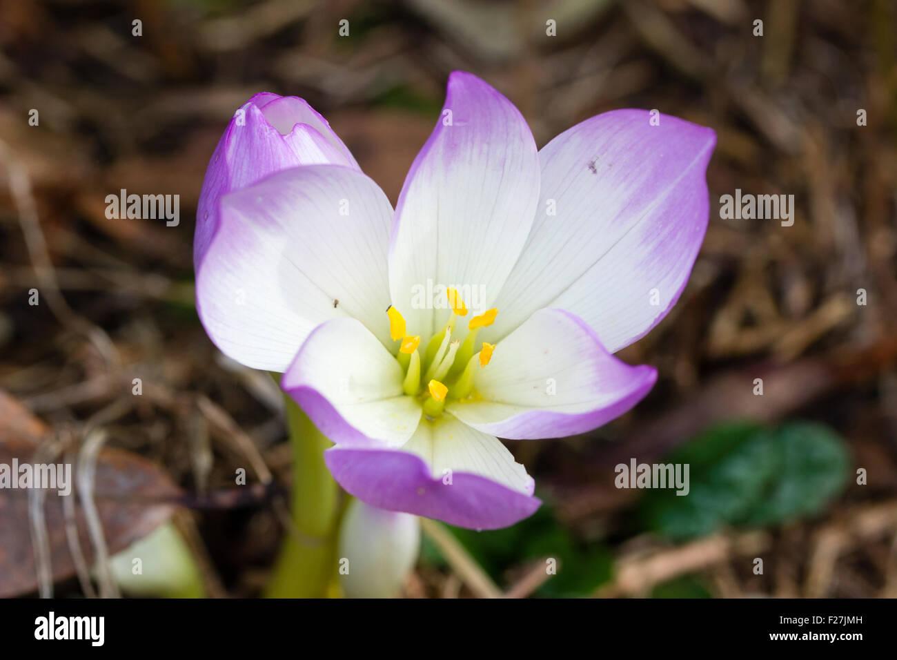 Welche Blumen Blühen Im September eine frühform blühende wiese safran blumen herbstzeitlosen antares