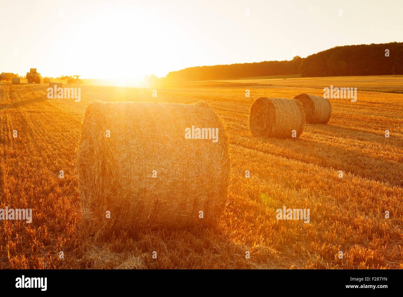 Heuballen bei Sonnenuntergang, schwäbischen Alb, Baden-Württemberg, Deutschland Stockbild