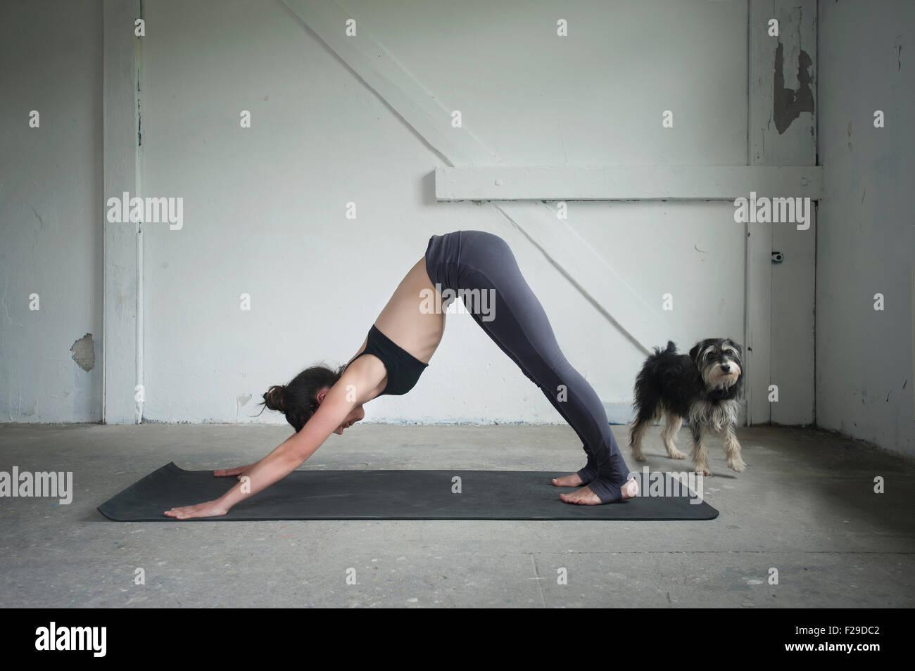 Mitte Erwachsene Frau üben nach unten schauenden Hund darstellen Sie, im Yoga-Studio, München, Bayern, Stockbild