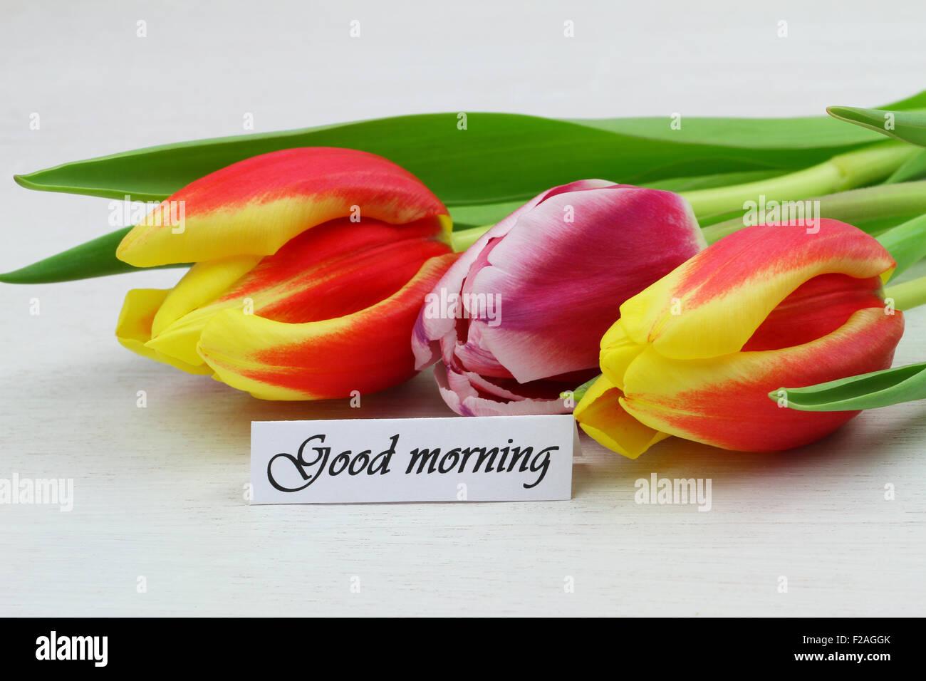 Guten Morgen Karte Mit Bunten Tulpen Stockfoto Bild