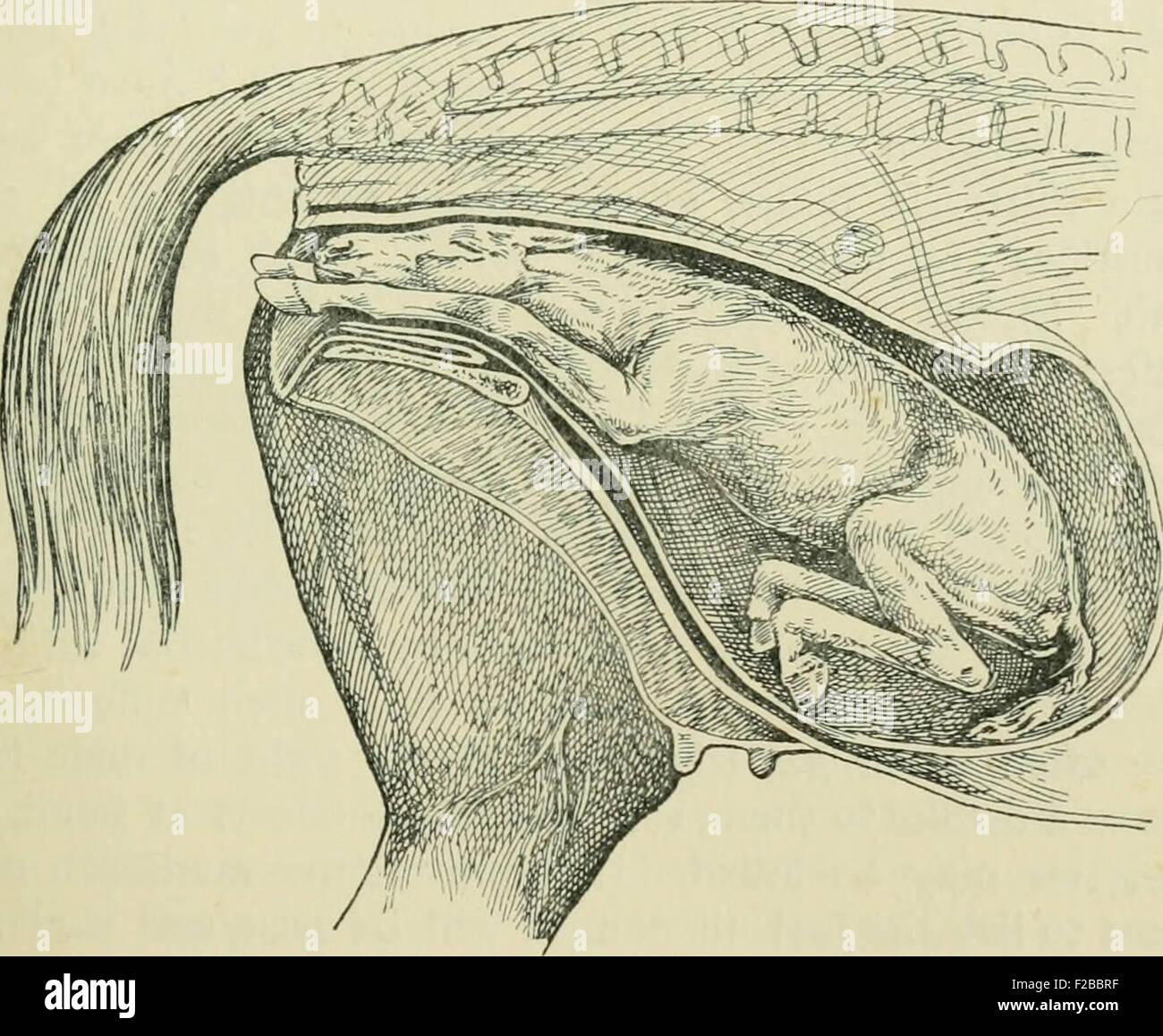 Groß Rinder Anatomie Und Physiologie Fotos - Menschliche Anatomie ...