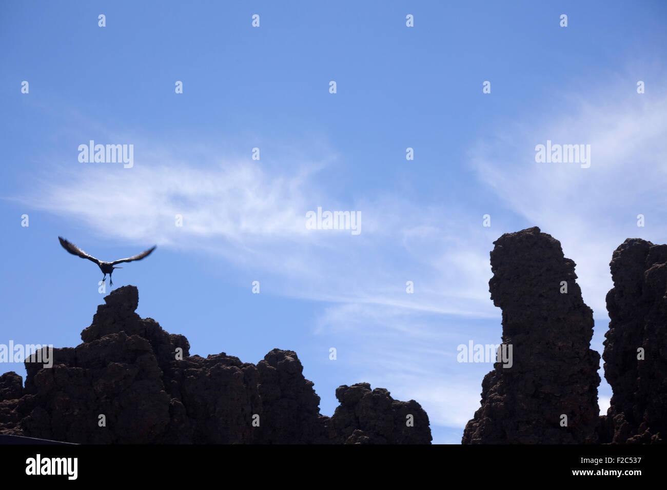 Rabe auf der Suche der Roque de Los Muchachos, La Palma, Kanarische Inseln, Spanien Stockbild