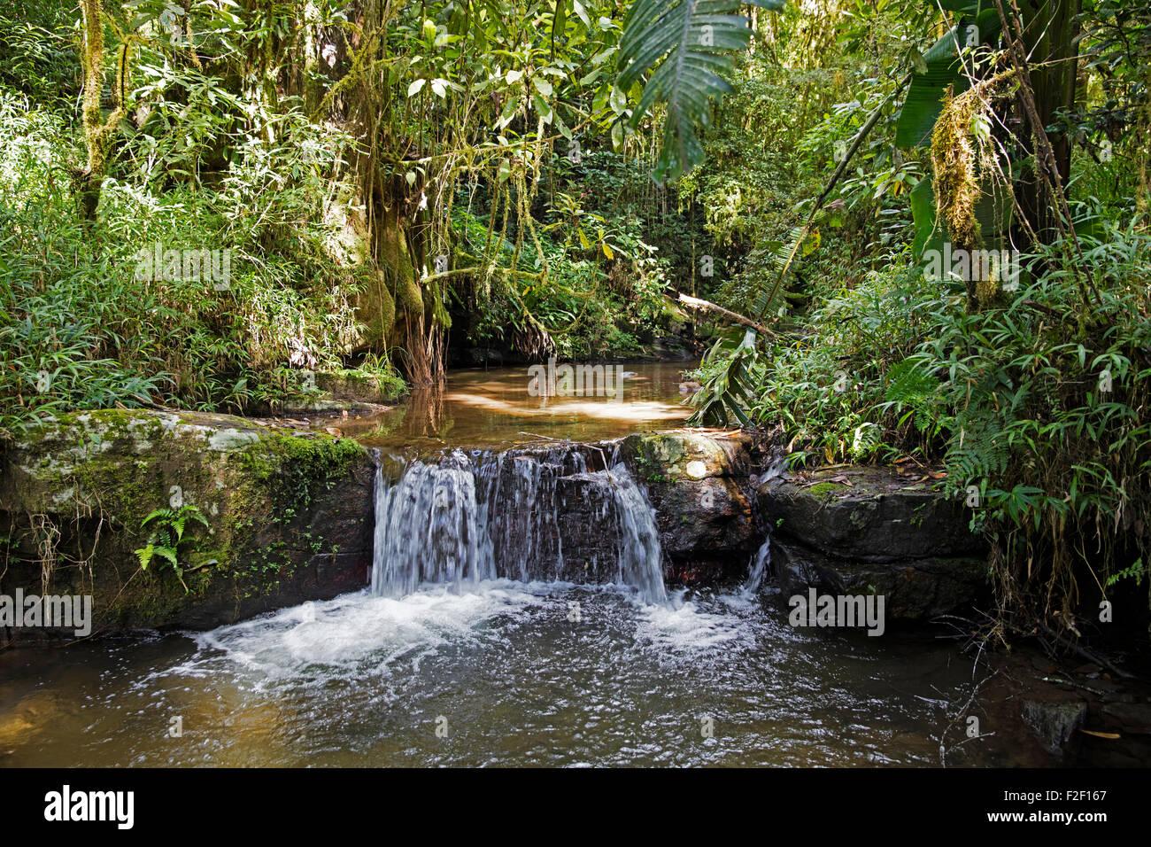 Bach mit Wasserfall im Regenwald der Ranomafana Nationalpark, Haute Matsiatra, Madagaskar, Südostafrika Stockbild