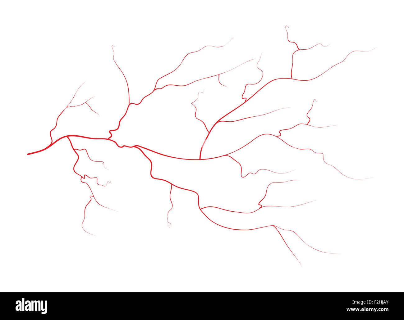 Inside Blood Vessels Stockfotos & Inside Blood Vessels Bilder - Alamy