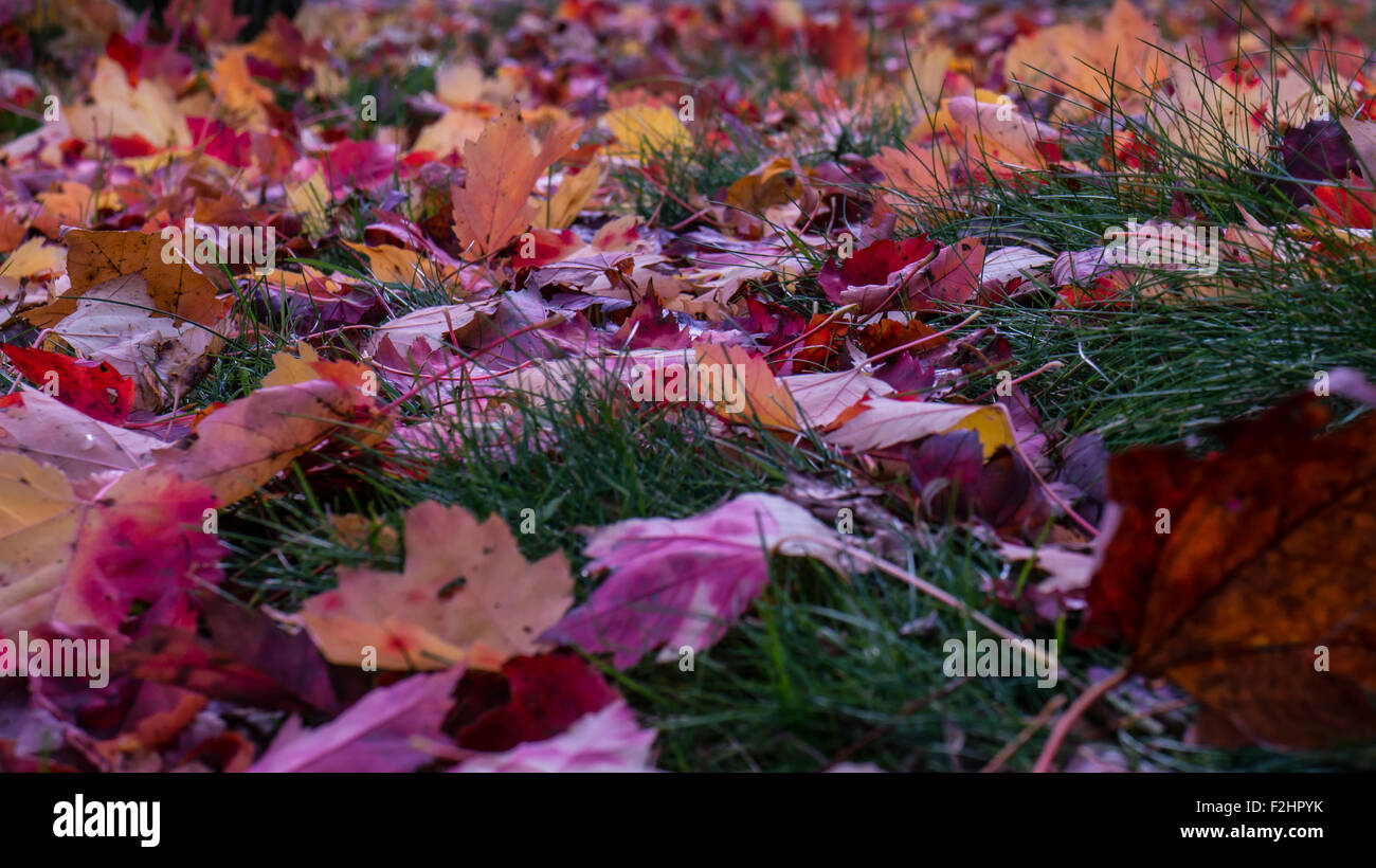 nova scotia autumn stockfotos nova scotia autumn bilder alamy. Black Bedroom Furniture Sets. Home Design Ideas